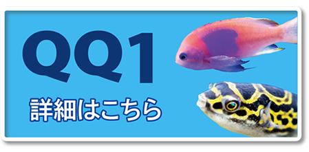 QQ1詳細はコチラ