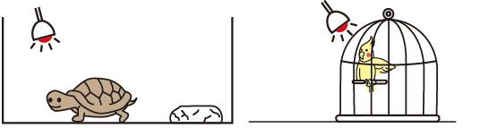 ストロング インフラレッド ヒートランプの設置例